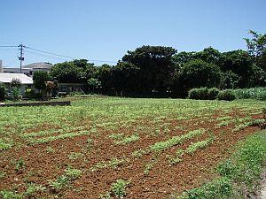 20070627-1.jpg