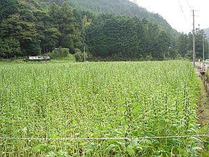 20070924-2.jpg