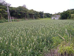 20080830-okinawa-1.jpg