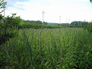 20080908-okinawa-2.jpg