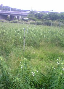 090702-okinawa-5.JPG