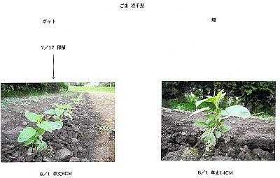 090801iwatekuro-1.jpg