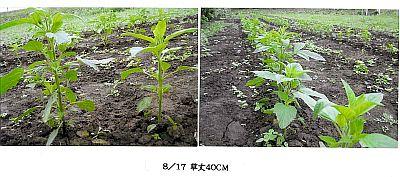 090817iwatekuro-1.jpg