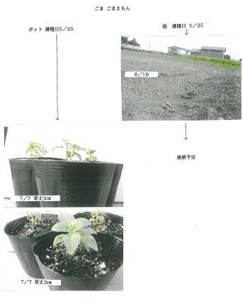 holtukaidou-3.jpg