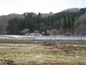 今期の栽培予定圃場