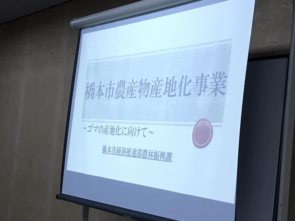 hasimoto2017